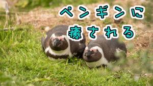ペンギンに癒される